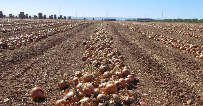 cebolla Castilla la Mancha