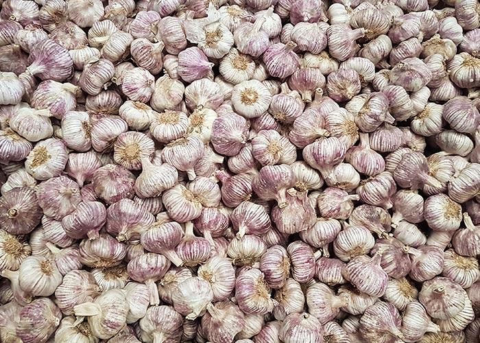 where to buy garlic in spain